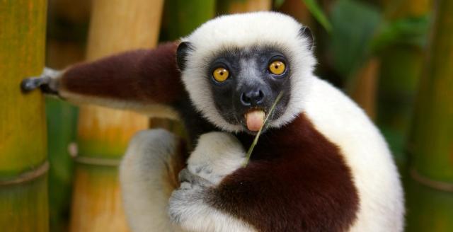 Apri Madagascar / Nosy Be - Veraclub Palm Beach and Spa - Meta ideale per gli amanti della natura e del mare sul sito Caesar Tour Sposi